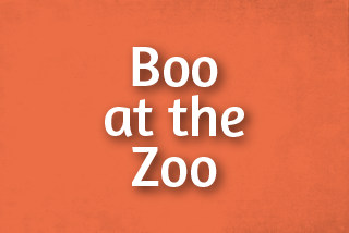 Boo at the Zoo Events Web Tile