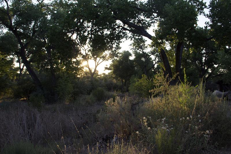 Bosque at Sunset ABQ BioPark