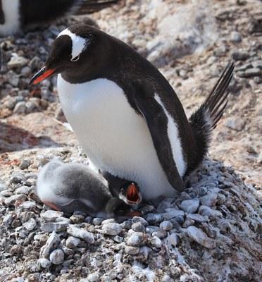 Build a Penguin Nest BioPark Connect