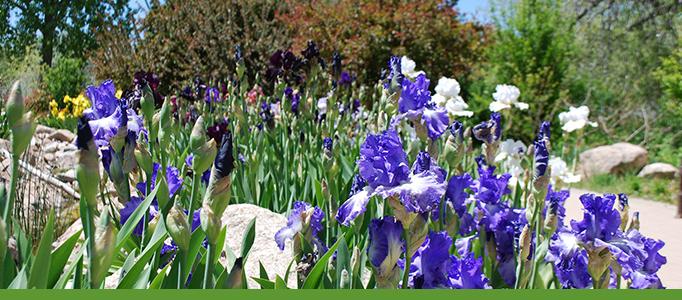 Camino de Colores, Botanic Garden