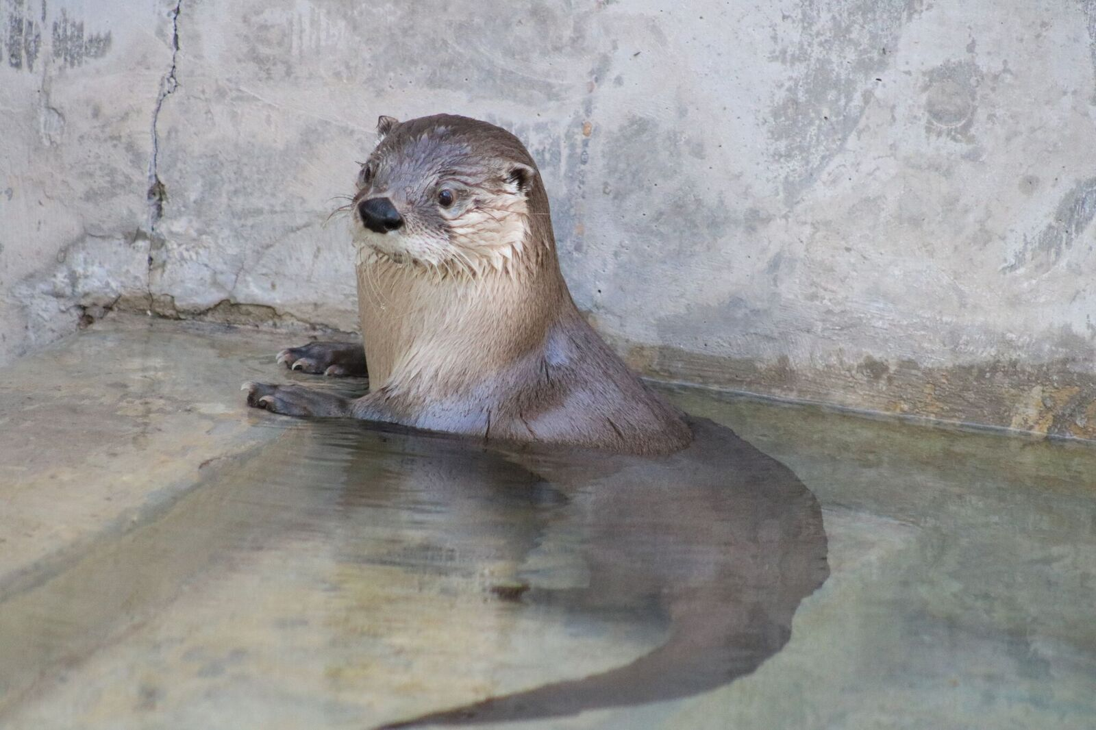 Otter Chaos in Water
