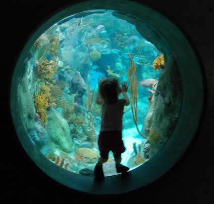 Child in bubble window at the Albuquerque Aquarium