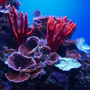 Coral Headshot Aquarium Yearbook