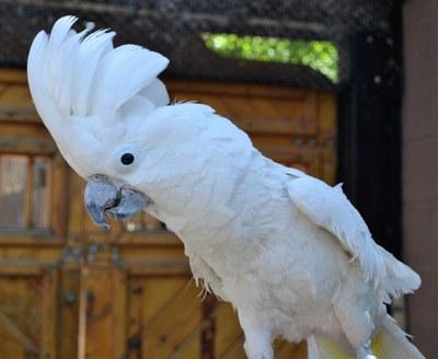 Cockatoo BioPark Connect Parrots
