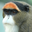 De Brazza's Monkey Headshot Animal Yearbook