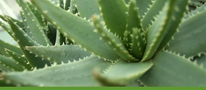 Desert Conservatory Banner, Botanic Garden