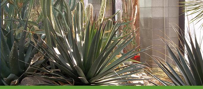 Desert Plants Tour Banner