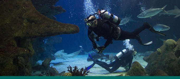 Diver in Aquarium Shark Tank Banner