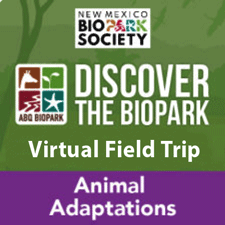 Discover the BioPark Icon Adaptations Programs
