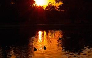 caption:Birds swim at Tingley Beach during sunset. Photo courtesy of Alex MC Tran.