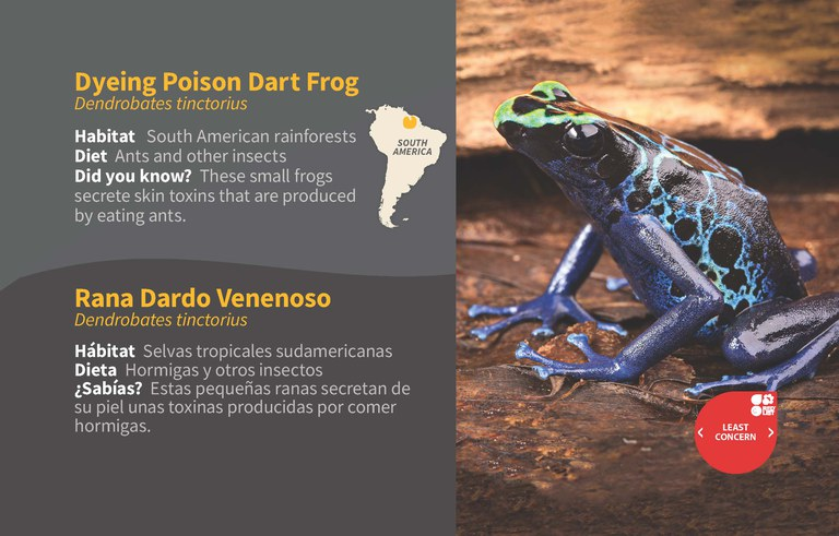Dyeing Poison Dart Frog ID 2020