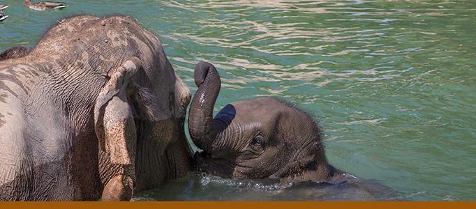 Elephant banner - Jazmine and Rozie 2015