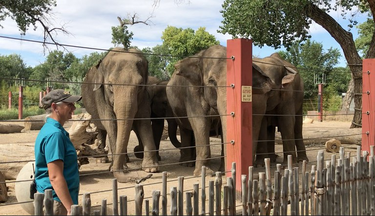 Elephant Herd with Rhonda BioPark Connect