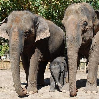 Elephant_square