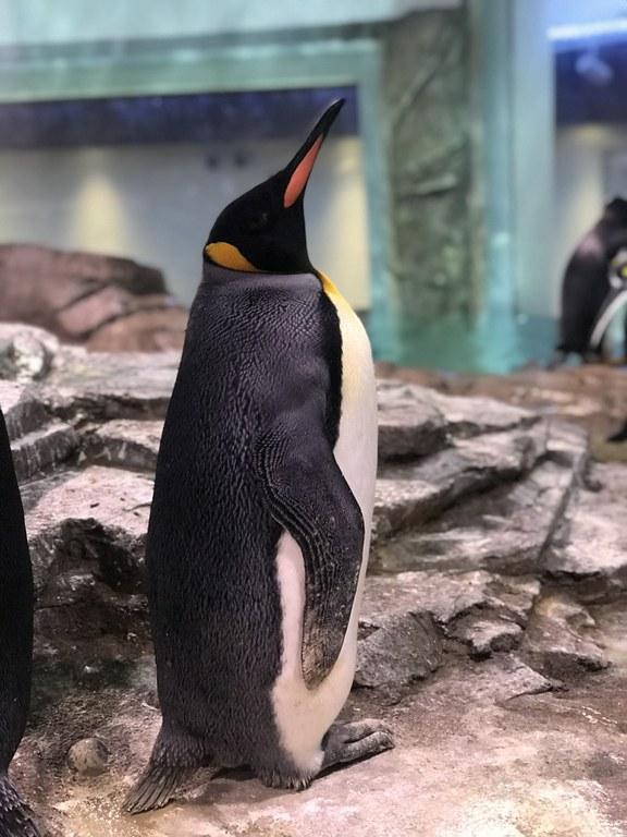 Build a Penguin Nest 2 BioPark Connect