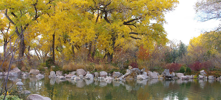 Fall Colors at the Botanic Garden