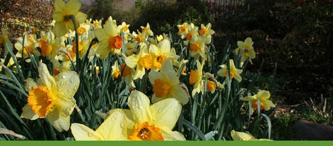 Flowers in Bloom Banner