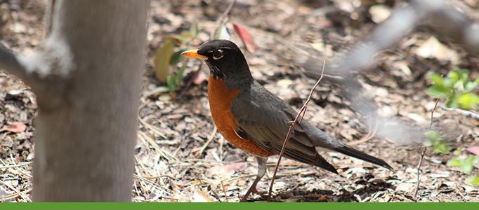 Botanic Garden Banner Bird Tours