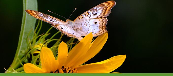 Botanic Garden banner