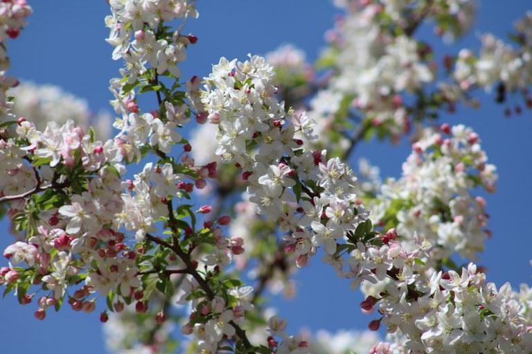 Spring at the Botanic Garden