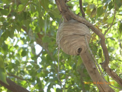 insect-nest-ghost-ranch-2018-biopark