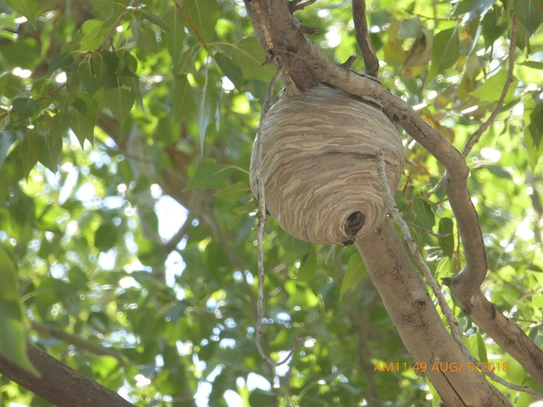 Insect Nest Ghost Ranch 2018