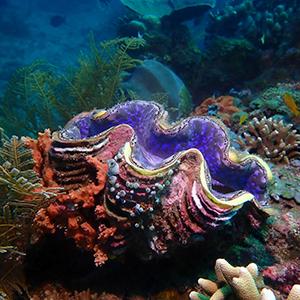 Headshot of Giant Clam