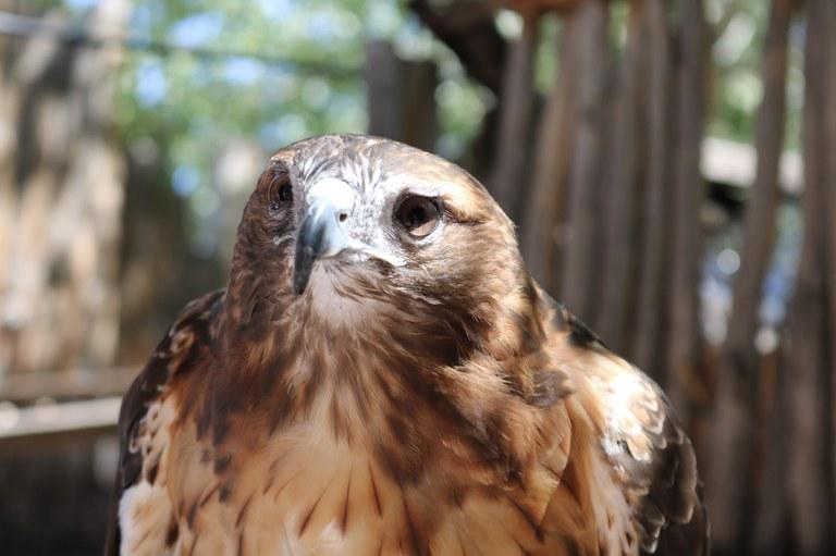 Hawk BioPark Connect Raptors