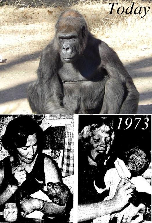 Huerfanita today and 1973