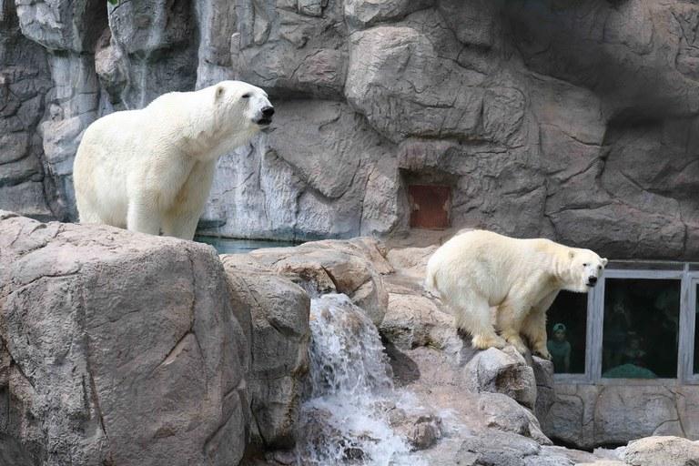 Iceberg Hop BioPark Connect Polar Bears