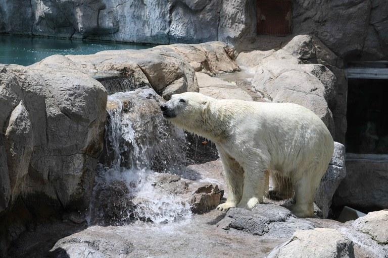 Intro to Polar Bear BioPark Connect