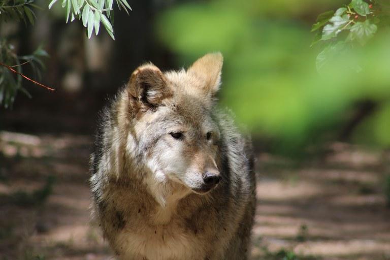 Jasmine wolf May 2016