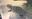 Krefft's Turtle Baby 2020