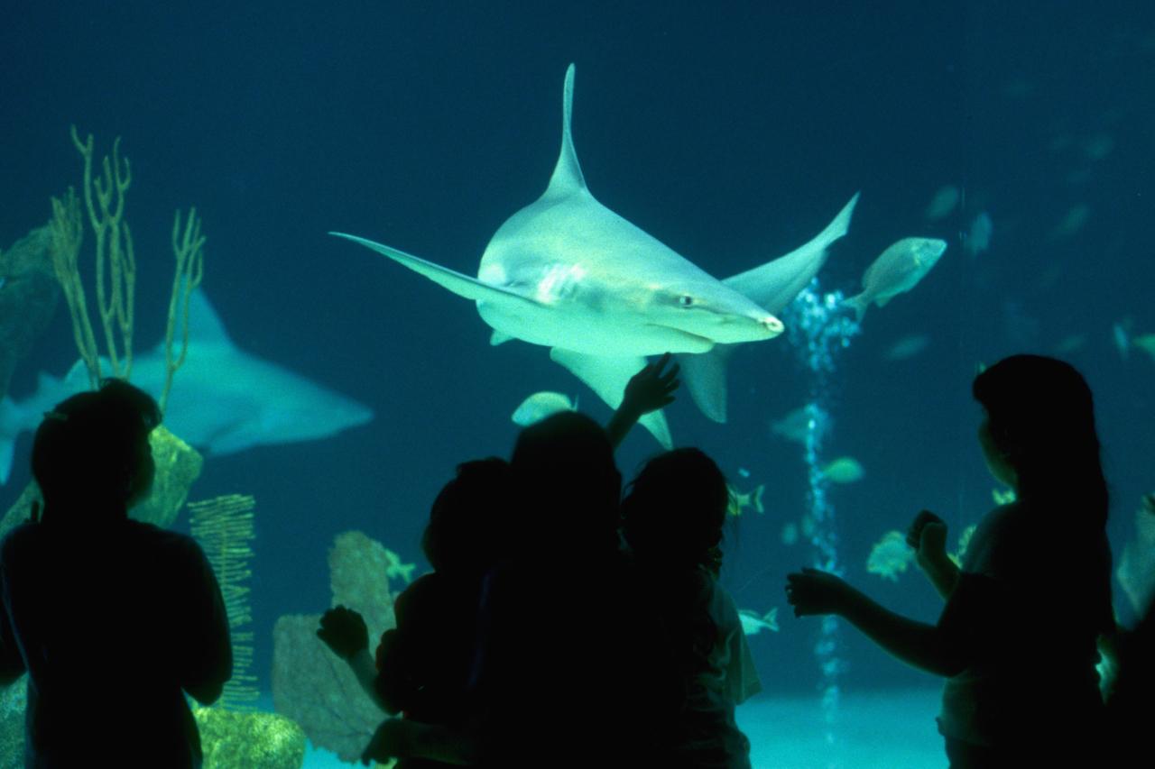 Aquarium Tile