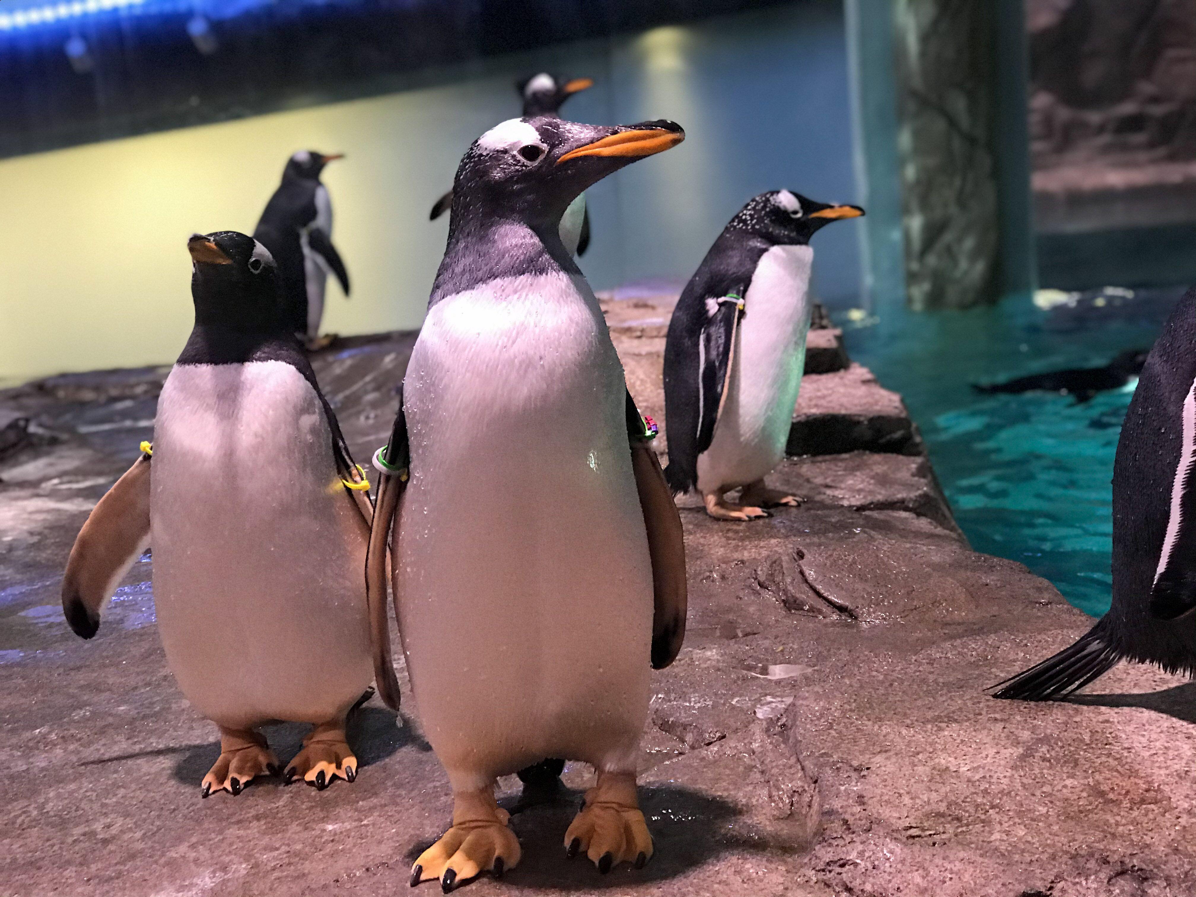 BioPark Connect Penguins Goal Photo