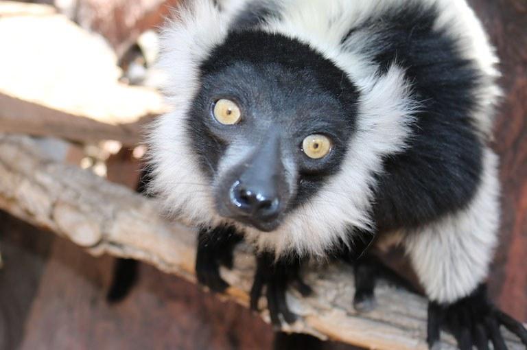 news and features tile lemur.jpg
