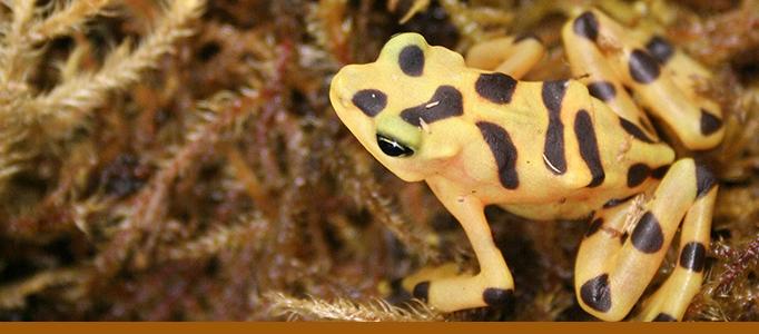 Amphibians - life on a limb