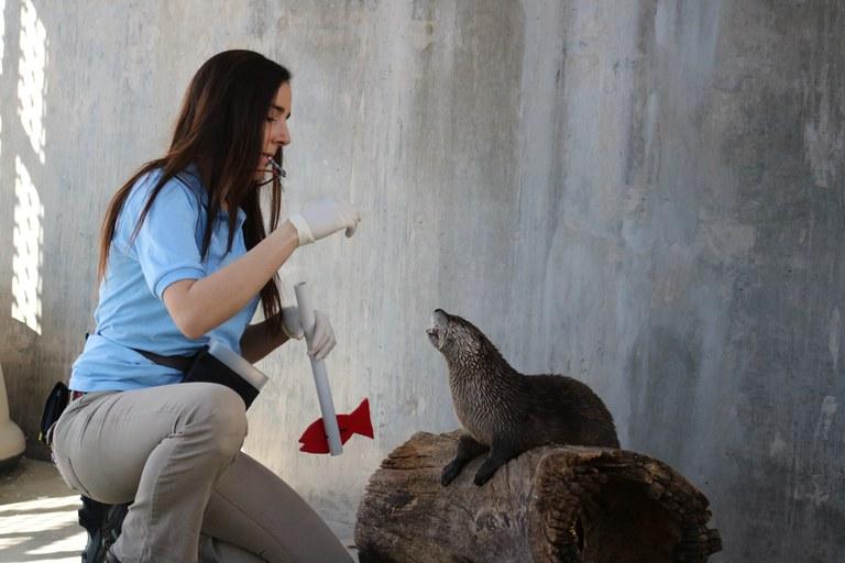 Mayhem otter training BioPark