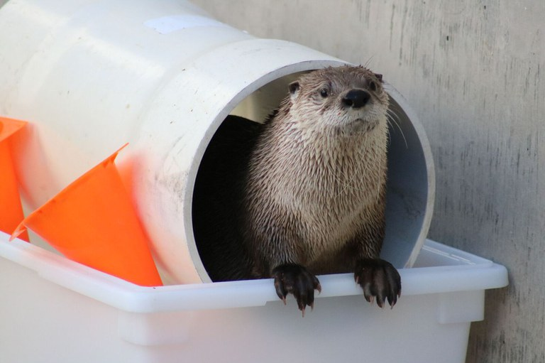 Otter Mayhem at the BioPark