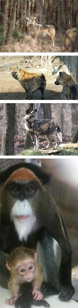 New Animals Spring 2016