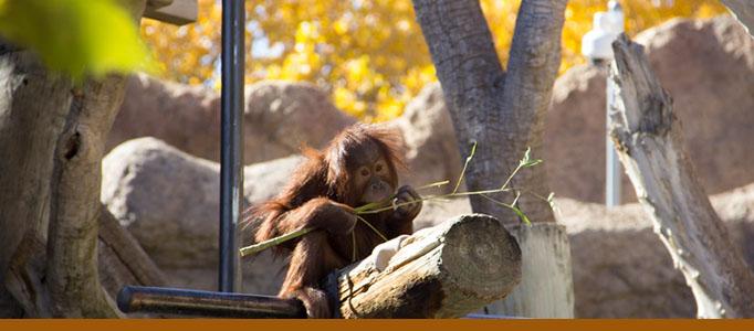 Orangutan exhibit banner: Pixel. Photo: Tina Deines