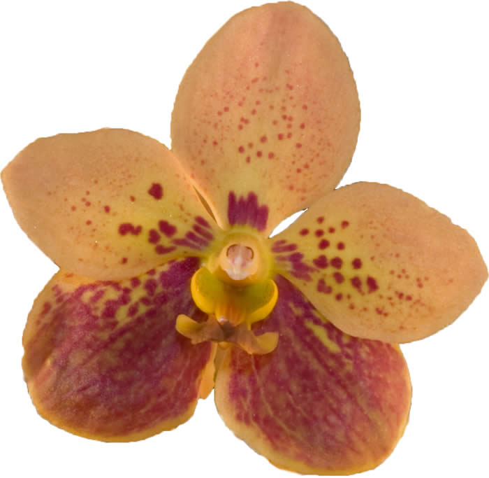 orchidcolor08.jpg