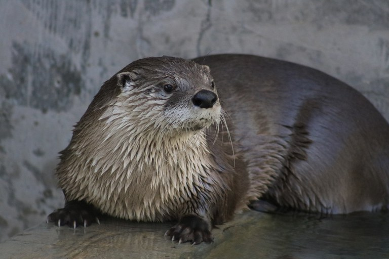 River Otter BioPark Connect