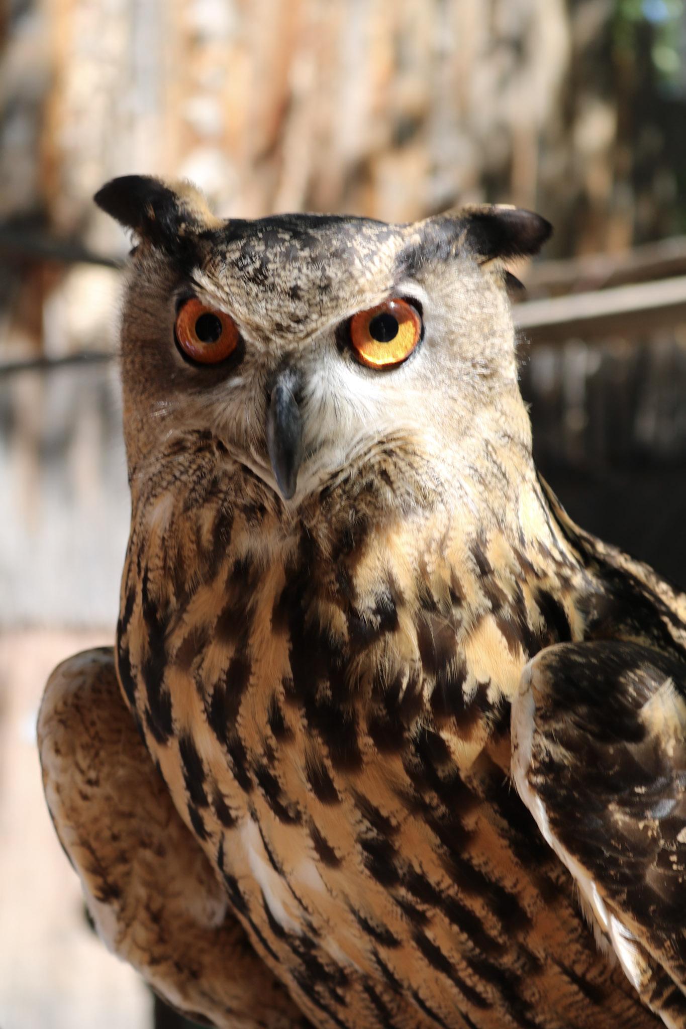 Owl BioPark Connect Raptors