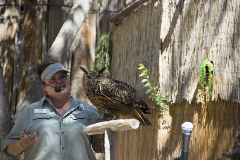 Owl Animal Encounters