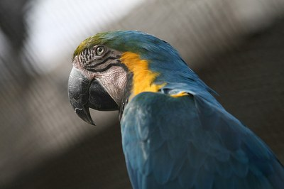 caption:An image of a parrot from the ABQ BioPark.