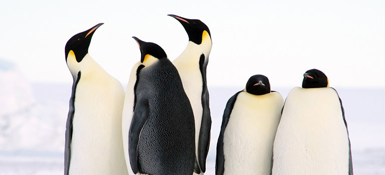 Penguin Cool Facts_Penguin Group