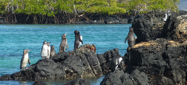 Penguin Cool Facts_Penguin Varied Locations