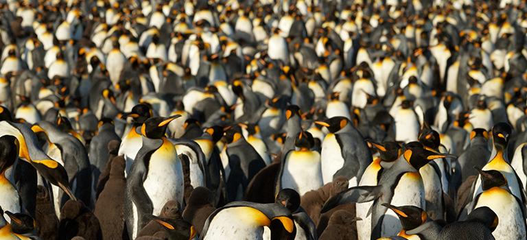 penguin-colony