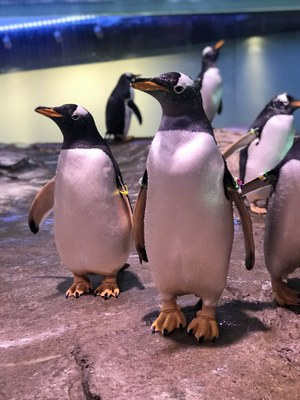 Penguins at the BioPark BP Connect